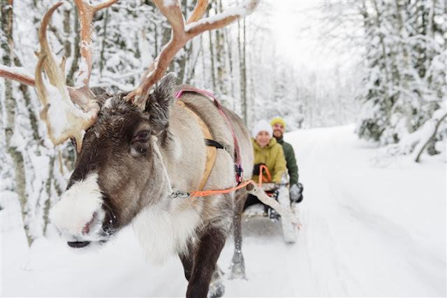 reindeer safari lapland finland