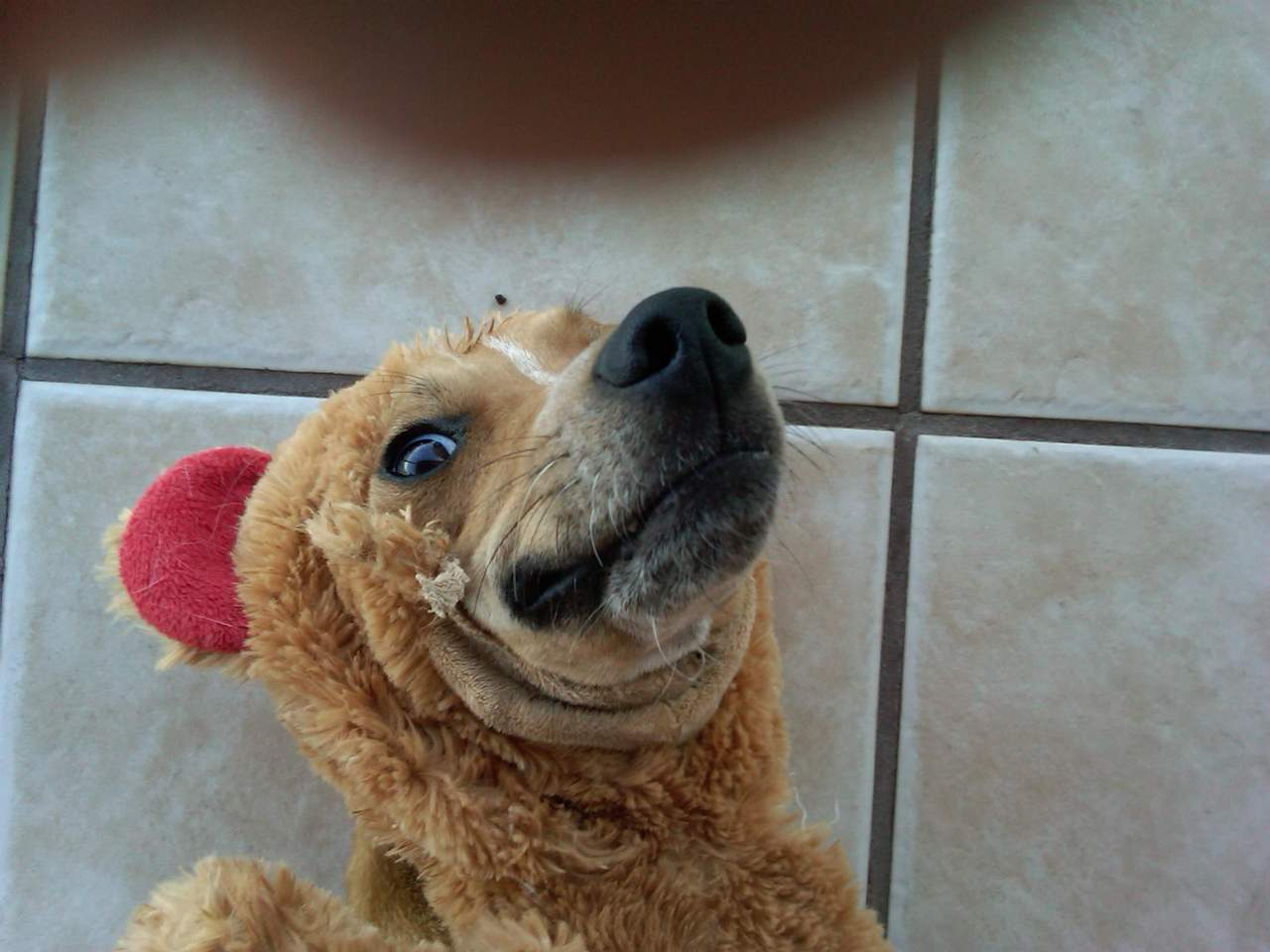 Funny Dog Face Tumblr 81309 Loadtve