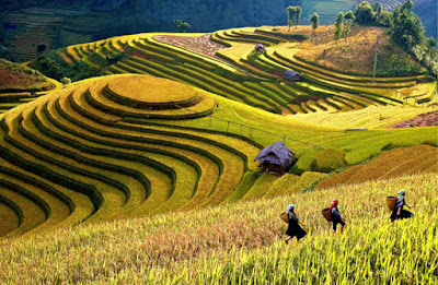 The Week of Culture & Tourism Festival in Mu Cang Chai district