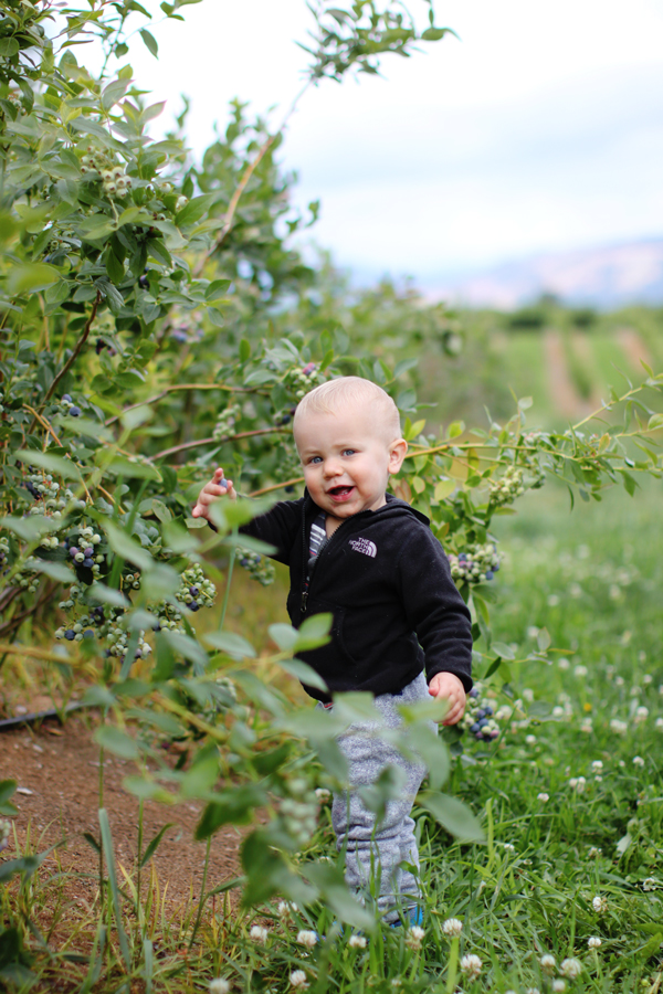Baby goes blueberry picking