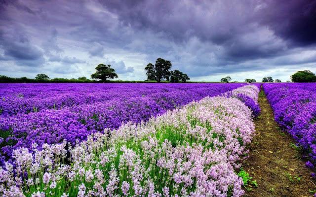 hoa đẹp nhất thế giới 1