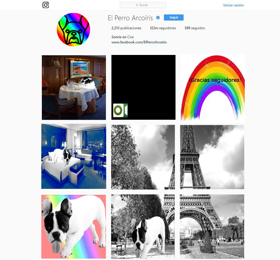 Instagram Perro Arcoíris
