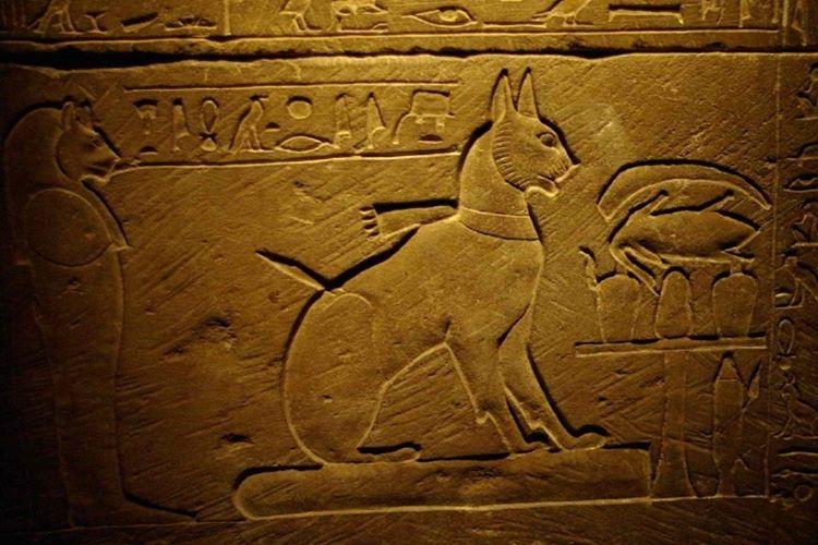 Antik Mısır'da kedisi ölen kişiler kaşlarını tıraş ederlerdi.