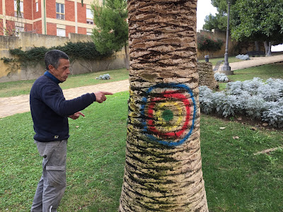 A gardener in Parco Bonaria explains how the red palm beetle works, drilling into the heart of the palm.