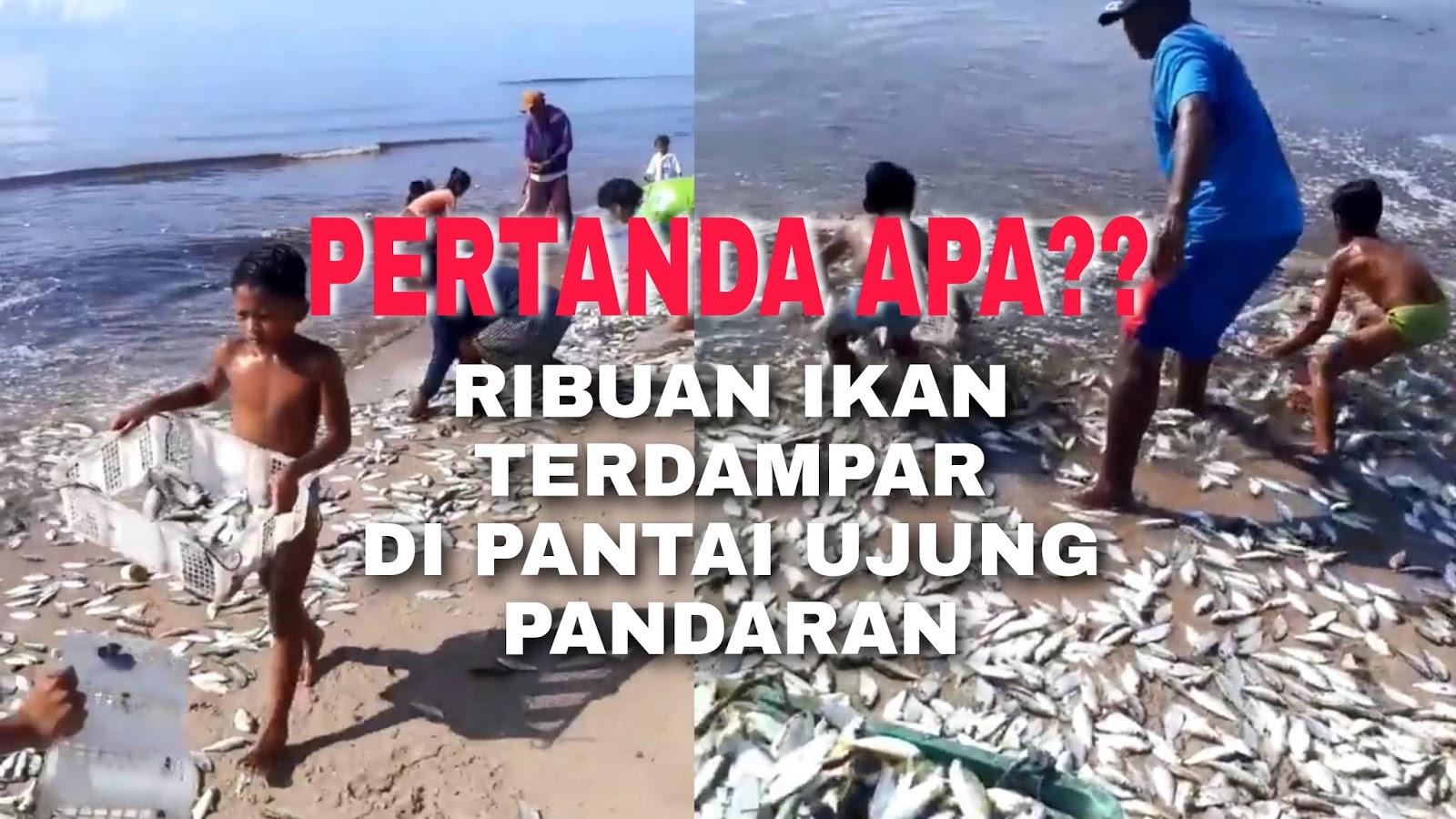 ikan terdampar, sampit, nelayan sampit, ujung pandaran