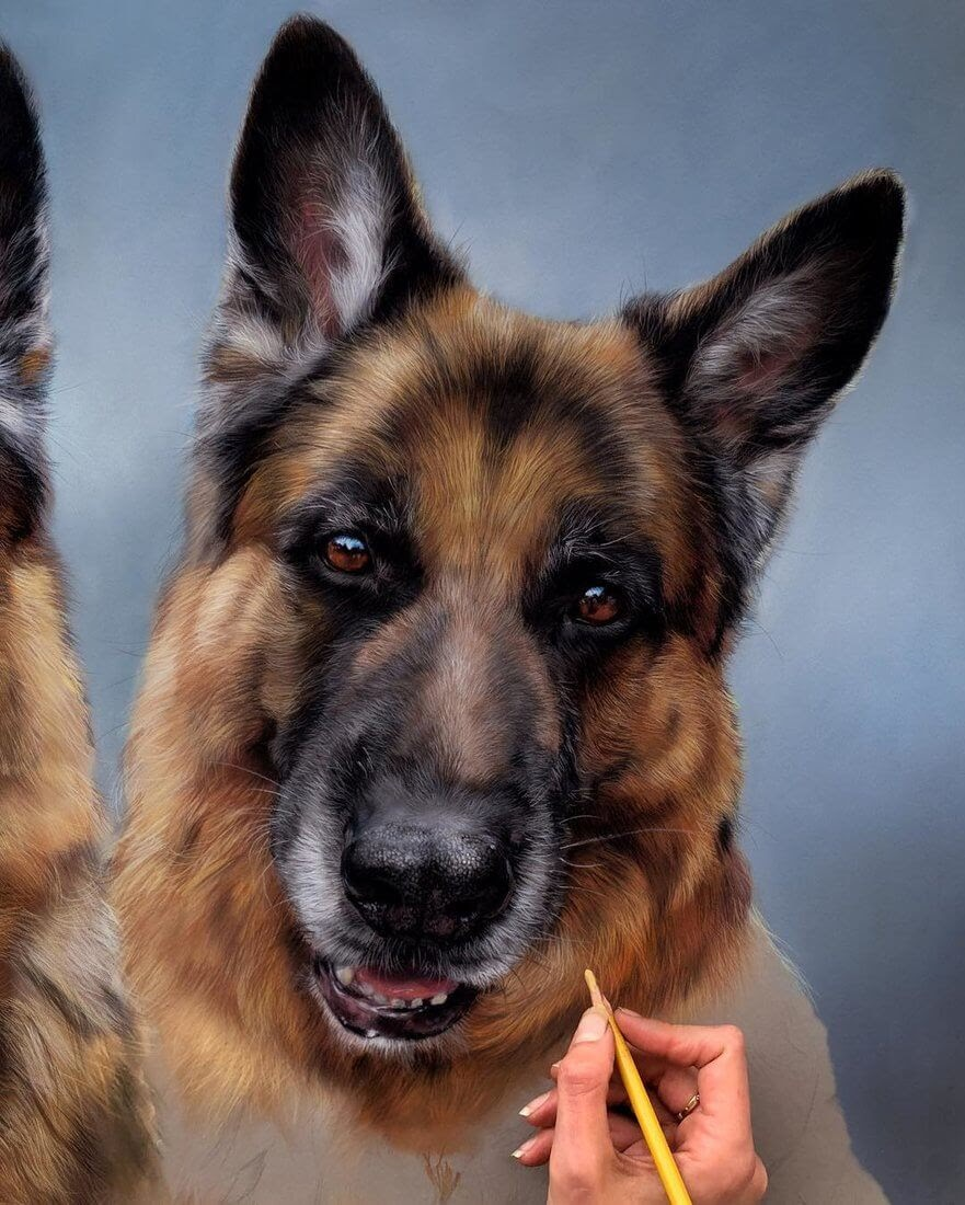 03-German-Shepherds-Patricia-Otero-Gorgeous-Expressions-in-Dog-Drawings-www-designstack-co