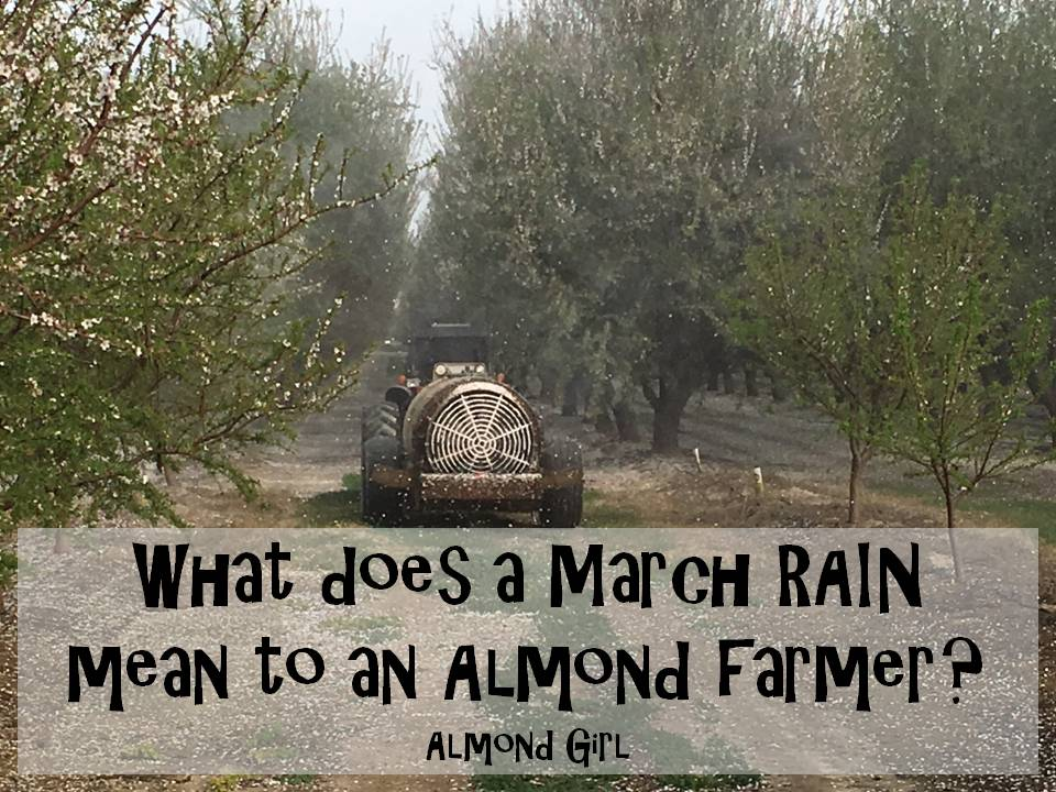 What Does A March Rain Mean To An Almond Farmer