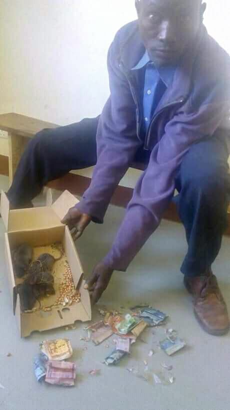 Drama As Man Storms Police Station With Rats That Ate His Money In A Box. Photo