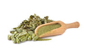 Moringa plant - Health Benefits, Medical Uses and Side Effects