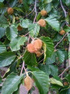 jadalne rośliny