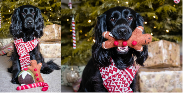 How to Have the Best Christmas With Your Pet