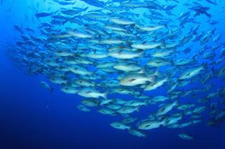 School of fish. (Credit: © Richard Carey / Fotolia) Click to Enlarge.