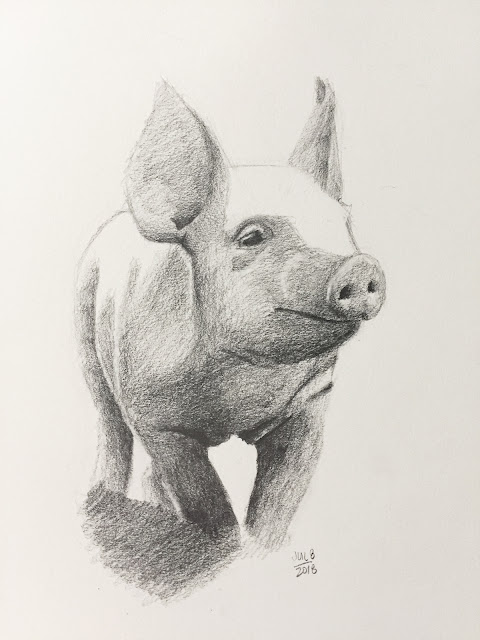 Daily Art 07-08-2018 graphite drawing of little pig