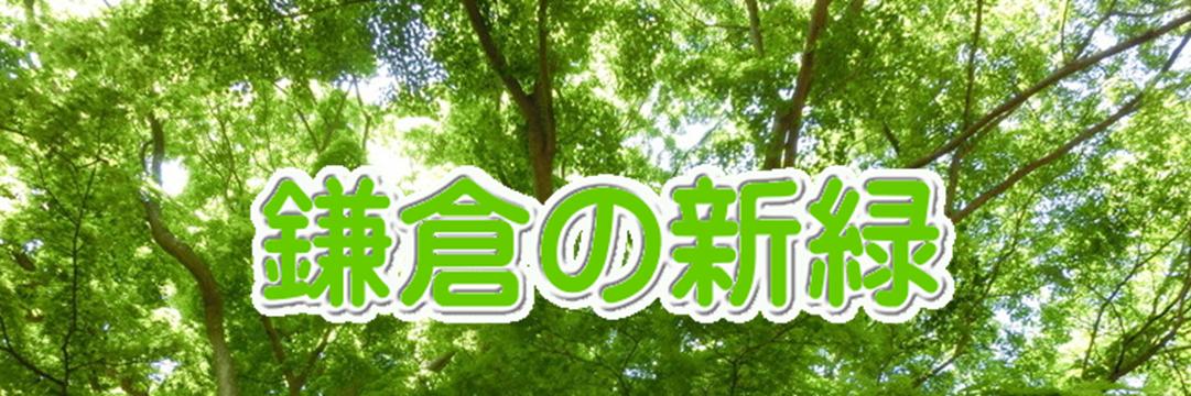 鎌倉の新緑