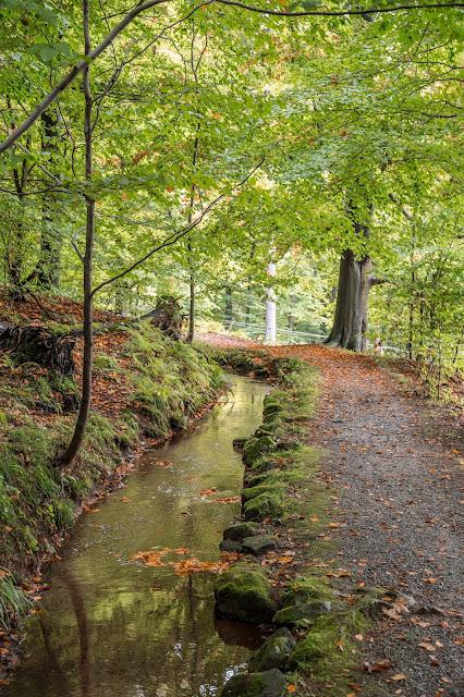 Drei-Täler-Tour  Themenwanderweg Bad Harzburg  Wandern im Harz  Baumwipfelpfad - Radauwasserfall - Eckertalsperre 05