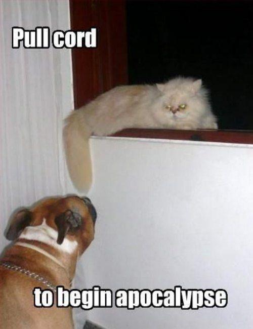 Funny Pull Cord Cat Apocalypse Joke Picture