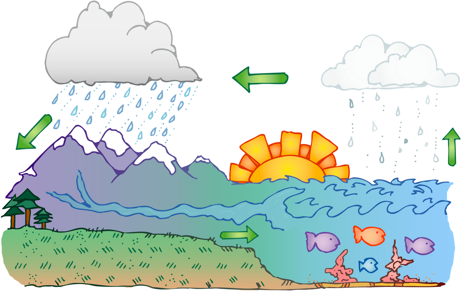 Water Cycle Diagram Worksheet Printable