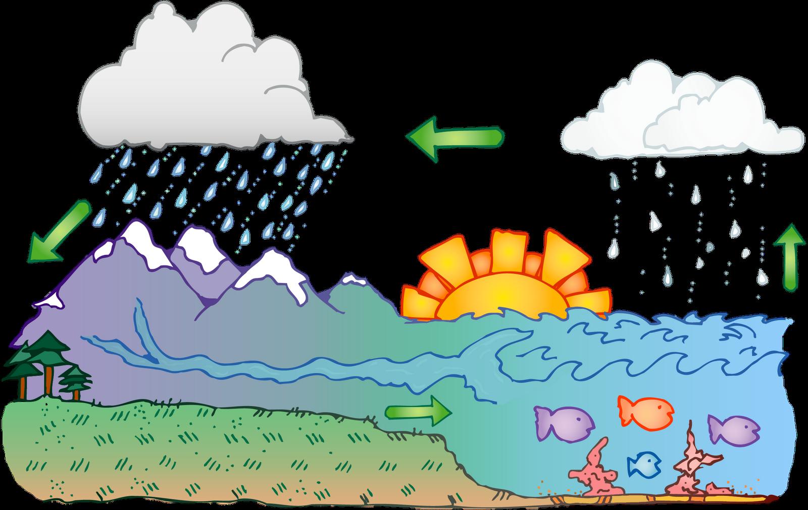 Water Cycle Diagram Worksheet Printable