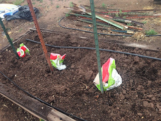 Dusty river gardens for Soil xat cut off