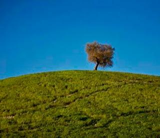 Árbol solitario en un terreno deforestado. A estos paisajes del estilo Mago de Oz  muchos los ven hermosos y hasta los  turistas les toman fotos, son en realidad  tierras secas y semidesérticas donde  se arrojan muchos agroquímicos  que no permiten la vida animal.