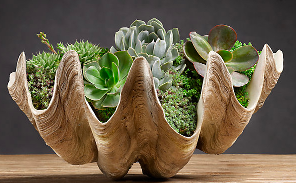 And Pottery Barn S Faux Clam Succulent Available Here Decorating On The Half Shell Clamshells In Home Decor Driven By