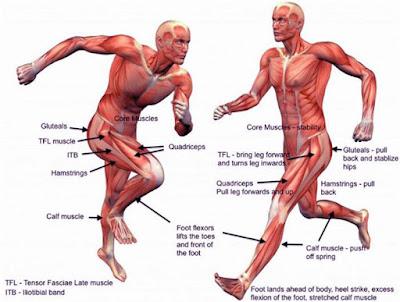 Как тренировать мышцы спринтеру