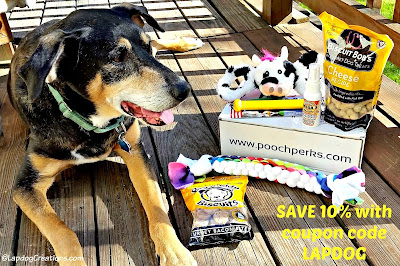 Teutul wants you to SAVE 10% on #PoochPerks subscriptions with his #coupon LAPDOG! #LapdogCreations #rescuedog ©LapdogCreations