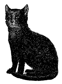 cat black image illustration
