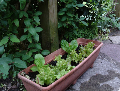 holiday proof garden containers moved to cool shady spots Green Fingered Blog