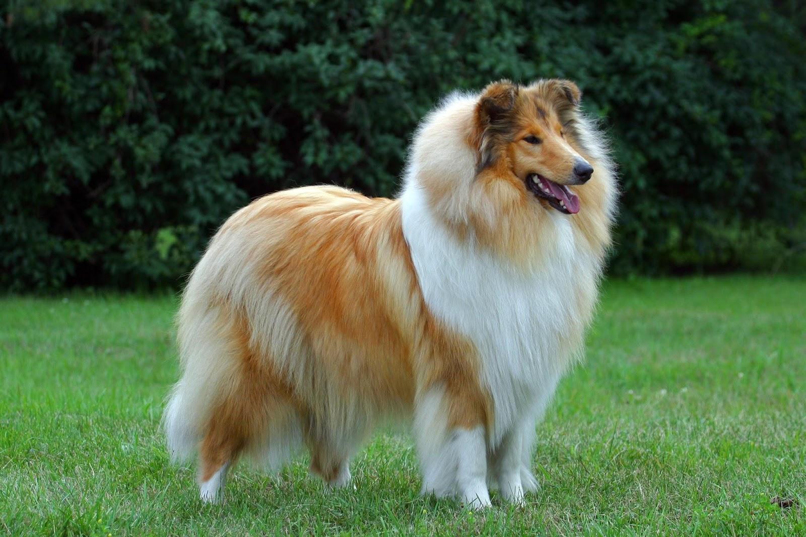 morsorosso: le 47 razze canine piu' famose