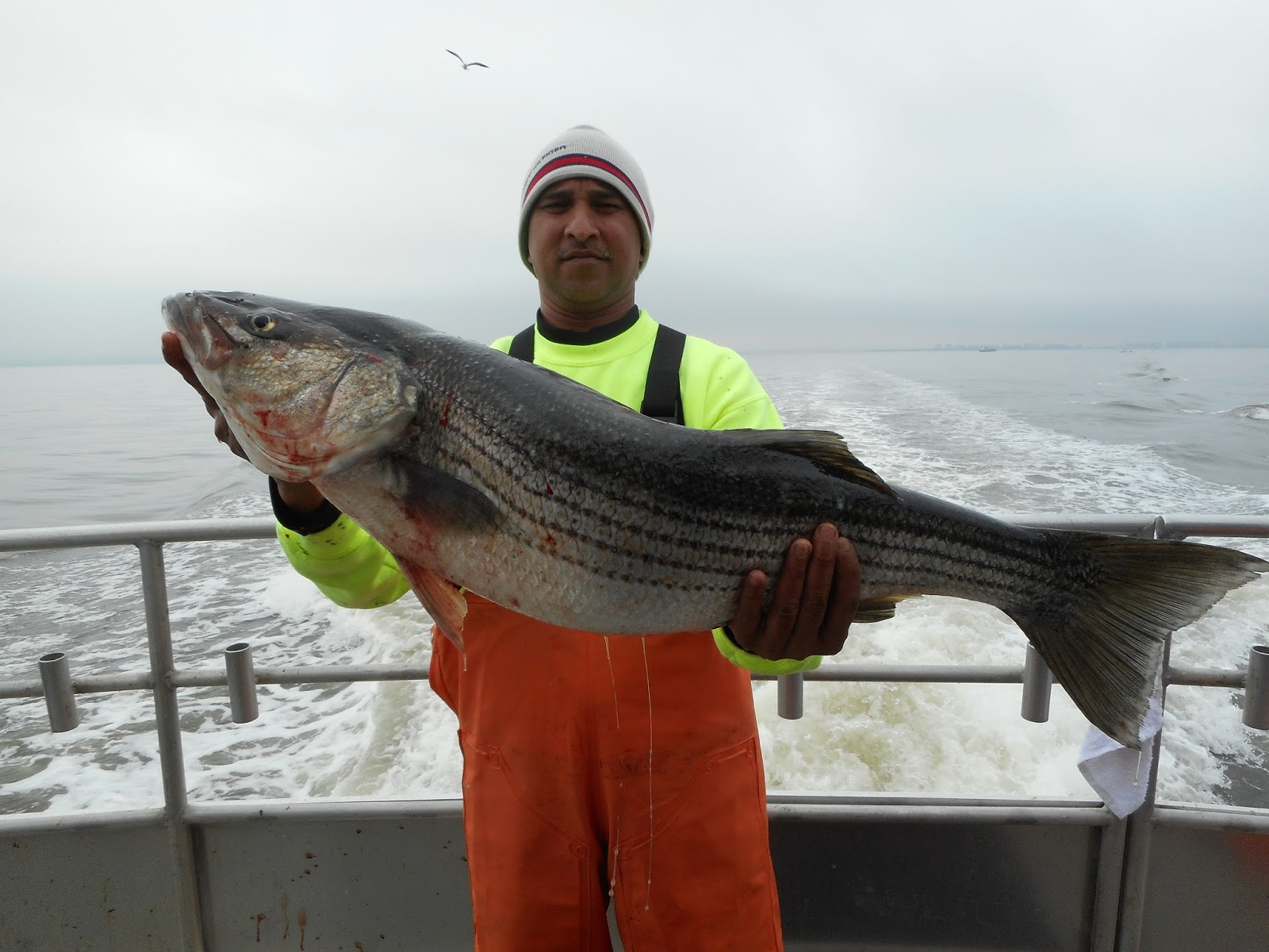 Nj salt fish 2016 05 07 seahunter atlantic highlands for Atlantic highlands fishing report