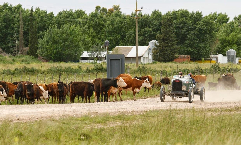A melhor carne vermelha do mundo vem dos Pampas onde os bovinos veem Baquets passar.