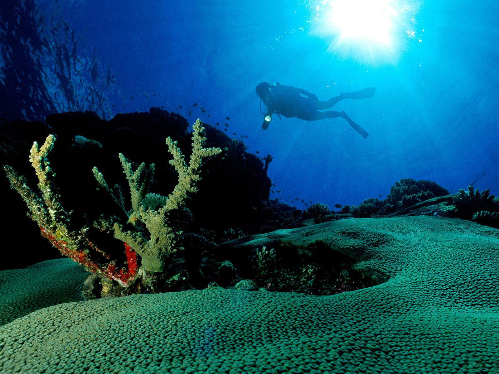 Underwater Hd Wallpaper Hd Wallpaper