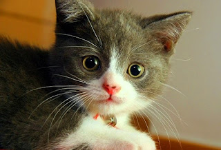 Pesan Baik Dalam Mitos Kesialan Menabrak Kucing