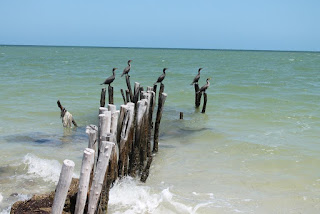 Birds on poles in the sea.