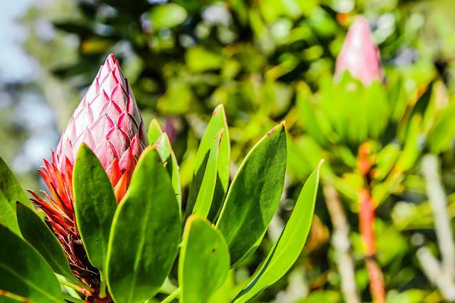 Kula Botanical Garden flower