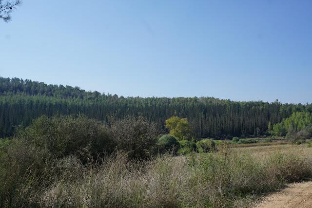 יער אשתאול