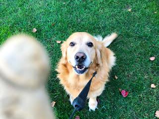 Essential Senior Dog Training Tools
