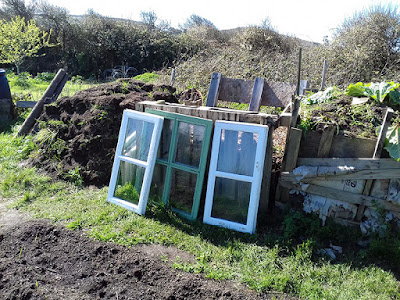Allotment Growing - Old Windows - Cold Frames