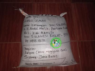 Benih pesanan  SANUSI USMAN Mamuju, Sulbar  (Setelah Packing)