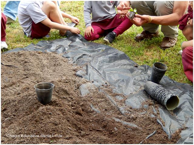 Preparando tierra para trasplantar albahacas - Chacra Educativa Santa Lucía