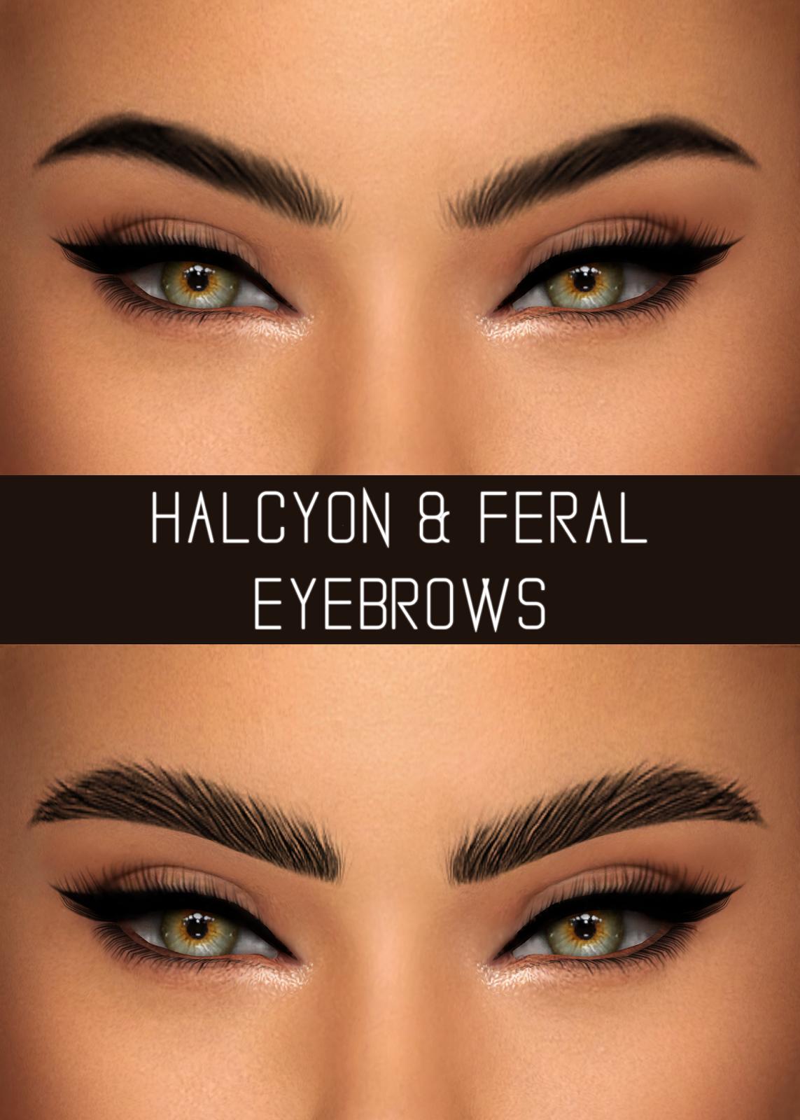 Halcyon Amp Feral Eyebrows Simpliciaty