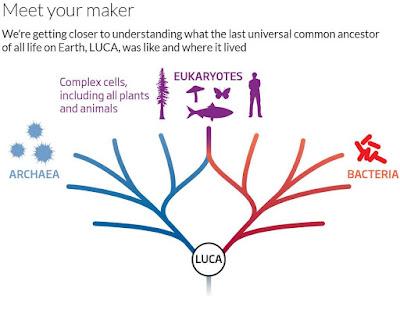LUCA - Last Universal Common Ancestor