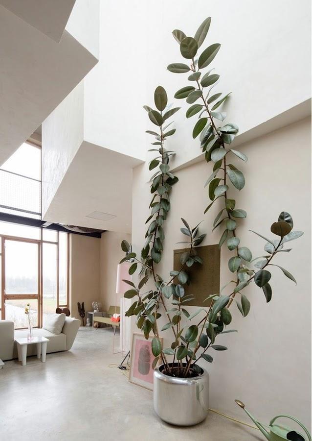 Las 10 mejores formas de decorar nuestra casa con plantas de interior (II)