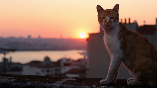 sunset cats istanbul