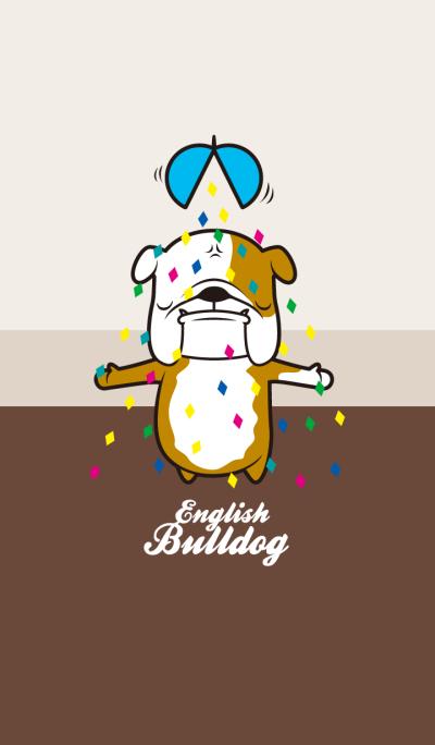 English Bulldog Loren