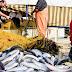 [Eλλάδα]Απίστευτη ψαριά στο Ναύπλιο: Έπιασε δυο τόνους κέφαλους !!