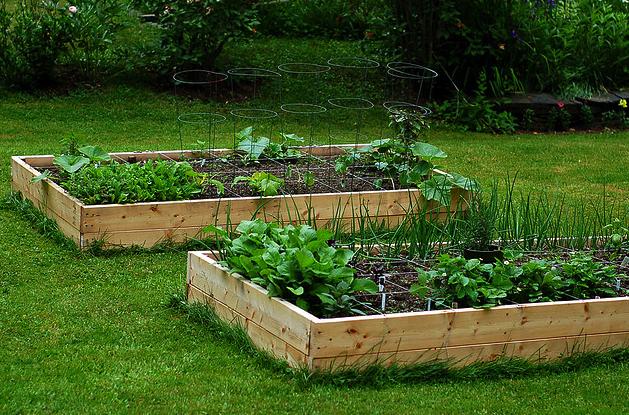 Il giardino di zerdesht coltivare in letto rialzato e for Terra per giardino