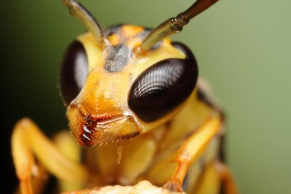 Insect by Gustavo Mazzarollo