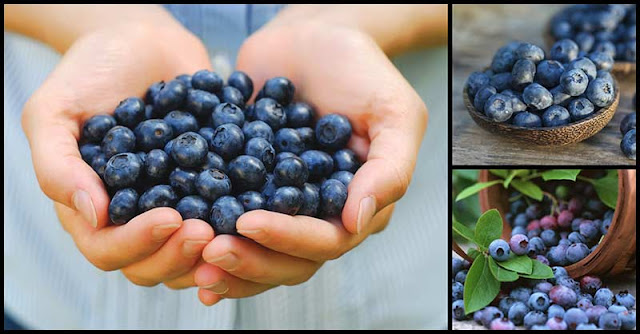 Help Lower Blood Pressure And Reduce Risk Of Cardiovascular Diseases With Blueberries